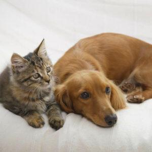 Hund und Katze liegen beisammen - Ideale Begleiter für Senioren